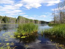 Sulla riva di bello lago Immagine Stock