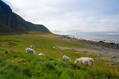 Sulla spiaggia in Eggum, la Norvegia Immagini Stock