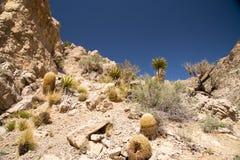 Sulla traccia fino al picco di Turtlehead nel parco rosso del canyon della roccia Fotografia Stock