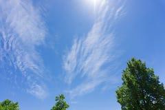 Sulla vista degli alberi e delle nuvole verdi su cielo blu immagini stock