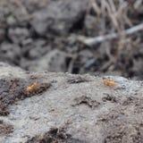 Sulle formiche vicine Fotografia Stock Libera da Diritti