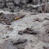 Sulle formiche vicine Immagini Stock