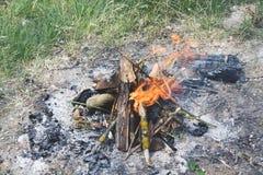 Sulle ustioni a terra del fuoco di a nella foresta con una fiamma luminosa immagine stock libera da diritti