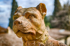 Sullen and wary sculpture of dog. Head of dog shows to be sullen and wary Royalty Free Stock Images