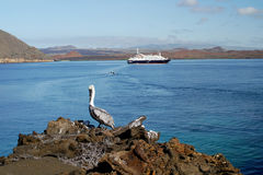 Sullivan Bay with cruise ship and pelican, Galapagos. Sullivan Bay with cruise ship and pelican on rocks, Galapagos.nLandscape orientation Stock Photos