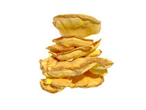 Sulphur shell chicken mushroom Laetiporus sulphure. Laetiporus is a genus of edible polypores growing throughout much of the world. Also known as the sulfur stock photography