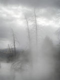 Sulphurous fog enveloping dead trees in Yellowstone. National Park (Wyoming, USA stock photography