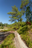 Sulphurous sjöar nära Manado, Indonesien Royaltyfria Foton