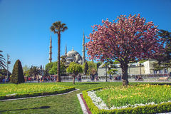 The Sultan Ahmed Mosque Blue Mosque stock photography