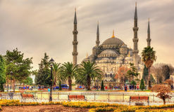 Sultan Ahmet Mosque (Blue Mosque) in Istanbul Royalty Free Stock Photography