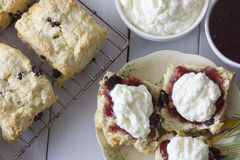 Sultana Scones with Jam and Cream Top View Stock Image