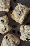 Sultana Scones on a Tray royalty free stock photo
