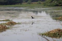 Sultanpur nationalpark Arkivfoto