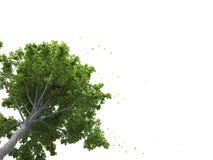 Sumário árvore/planta/3D no fundo branco, espaço para mensagens ilustração royalty free