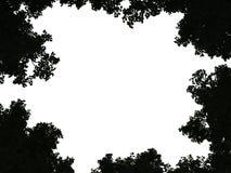 Sumário árvore/planta/3D no fundo branco, espaço para mensagens ilustração stock