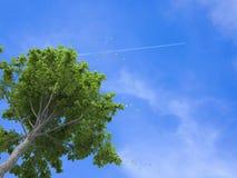 Sumário árvore/planta/3D no fundo branco, espaço para mensagens ilustração do vetor