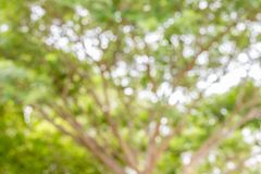 Sumário borrado da árvore Fotos de Stock