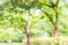 Sumário borrado da árvore Fotografia de Stock Royalty Free