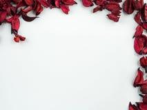 Sumário com as pétalas vermelhas secadas no fundo branco Fotografia de Stock
