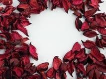 Sumário com as pétalas vermelhas secadas no fundo branco Foto de Stock Royalty Free