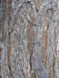 Sumário, contexto, fundo, casca, marrom, tapete, close up, cor, decoração, densa, flora, verde, folhas, material, natural, nature fotos de stock