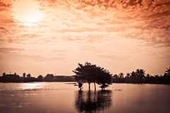Sumário da árvore no lago com as nuvens vermelhas do sol efetuadas Imagens de Stock Royalty Free
