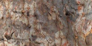 Sumário da casca de uma árvore de goma australiana fotos de stock royalty free
