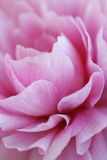 Sumário da flor Fotografia de Stock