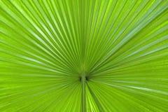 Sumário da folha de palmeira foto de stock royalty free
