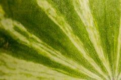 Sumário da melancia Textured modelado de linhas amarelas verdes ao longo da casca Foto de Stock Royalty Free