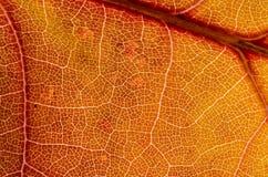 Sumário da natureza: Pilhas e veias de Autumn Leaf colorido Fotografia de Stock Royalty Free