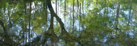 Sumário da reflexão da natureza Imagem de Stock Royalty Free