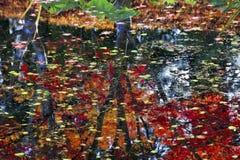 Sumário da reflexão das árvores das almofadas de lírio Fotografia de Stock