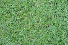 Sumário da superfície da grama do relvado do fundo da grama verde Fotos de Stock Royalty Free
