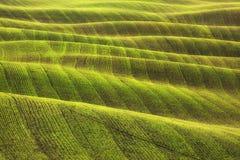 Sumário da textura do campo e das trilhas no inverno Toscânia, Italy Imagens de Stock