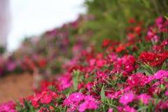 Sumário das flores Imagem de Stock