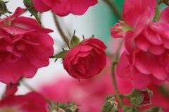 Sumário das flores Fotografia de Stock Royalty Free
