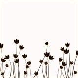 Sumário das folhas Imagens de Stock