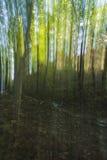 Sumário das madeiras Foto de Stock Royalty Free