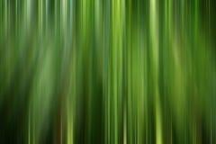 Sumário de bambu da floresta Fotos de Stock Royalty Free
