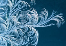 Sumário de Frost Fotos de Stock Royalty Free