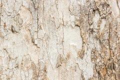 Sumário de madeira do teste padrão. Imagem de Stock Royalty Free