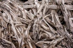 Sumário de ramos de árvore Fotografia de Stock