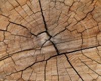Sumário de um tronco de árvore do corte Fotos de Stock Royalty Free