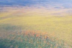 Sumário do campo de flor fotografia de stock