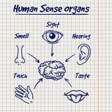 Sumário do esboço humano dos órgãos de sentido Fotografia de Stock Royalty Free