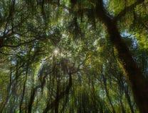 Sumário do fundo das árvores Fotos de Stock Royalty Free