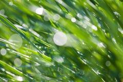 Sumário do macro do orvalho da grama Foto de Stock Royalty Free