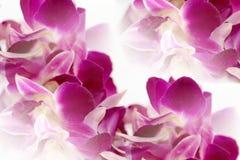 Sumário dos leus da orquídea do Dendrobium Foto de Stock