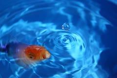 Sumário dos peixes Imagens de Stock